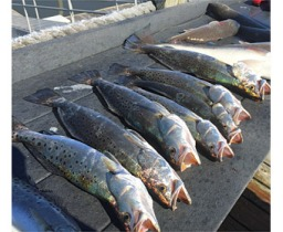Fishing_05A
